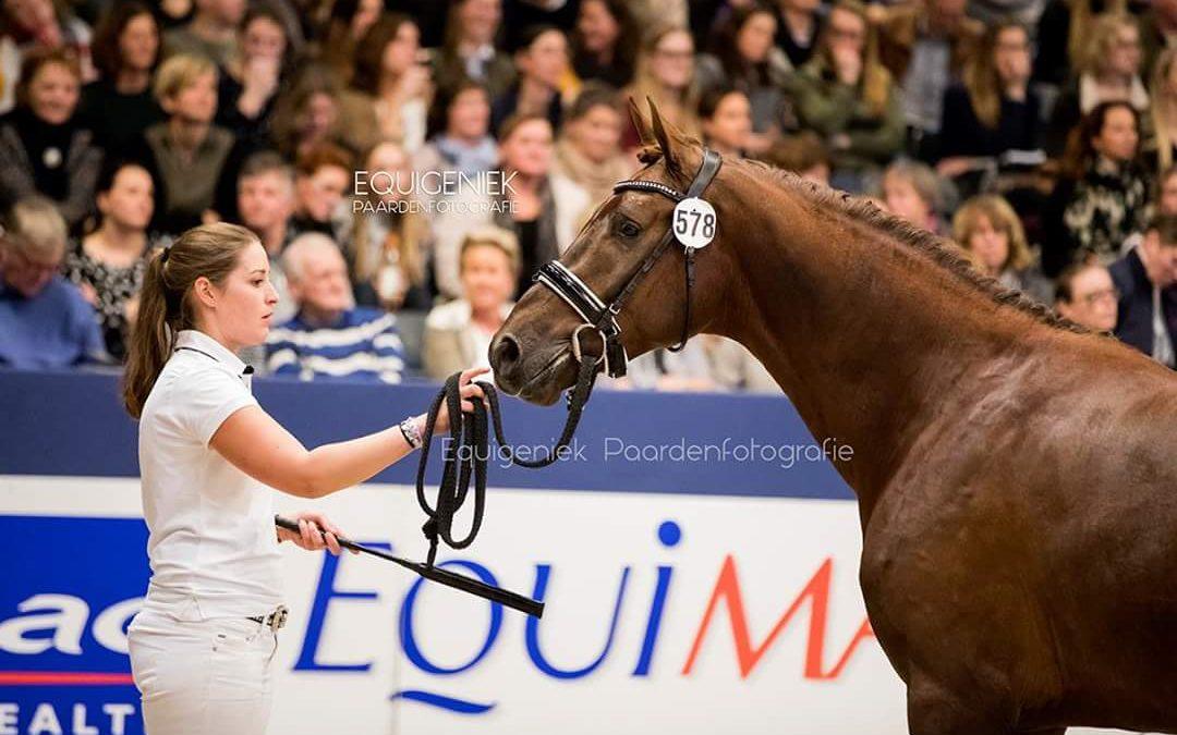 Succesvolle KWPN stallion show
