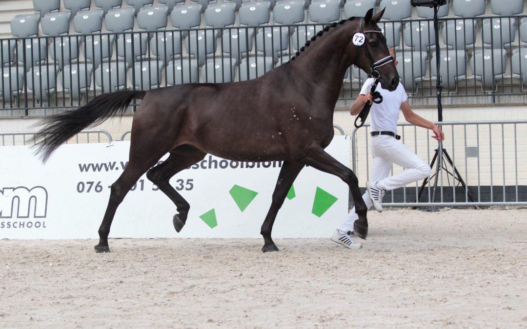 Reserve kampioen zuid Holland