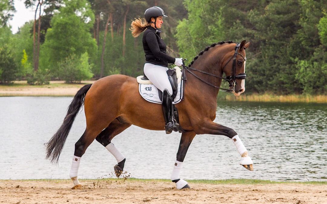 Lichte tour paard Fresco verkocht
